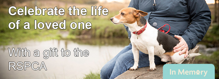 Terrier sitting with owner on a bench © RSPCA photolibrary