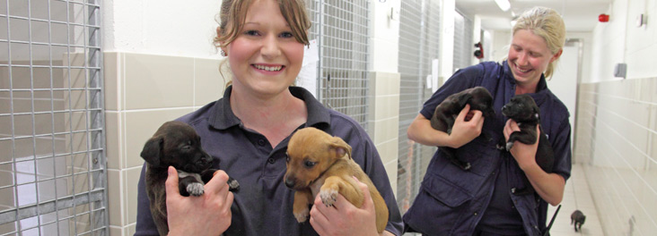 Animal care assistants holding puppies © RSPCA photolibrary