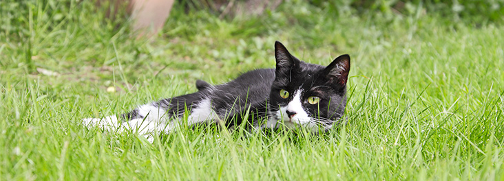 Cat lying in the grass © RSPCA photolibrary
