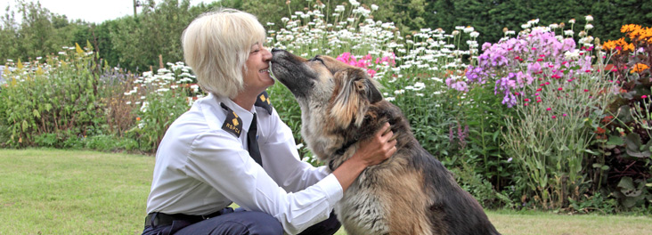 Inspector with German shephard © RSPCA photolibrary