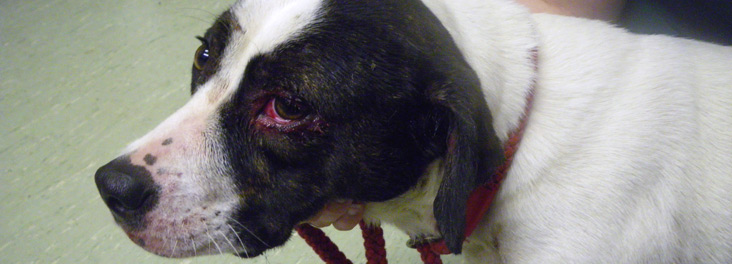 Victim of cruelty Leyla © RSPCA