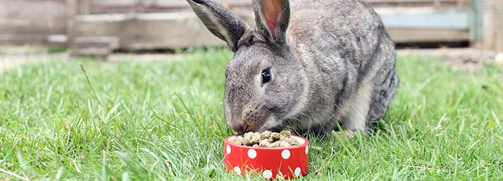 Rabbit eating rspca pet food out of a bowl © RSPCA photolibrary