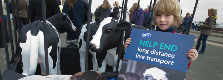 Transport of live animals protest in Ramsgate © RSPCA photolibrary