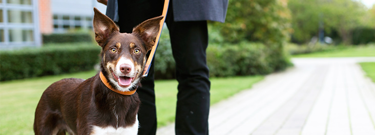 Handling lost, found and stray dogs | RSPCA