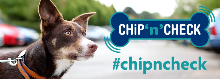 Tri coloured collie outside and Chip n check logo  © RSPCA