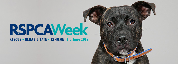RSPCA week logo and staffordshire bull terrier cross puppy @ RSPCA photolibrary