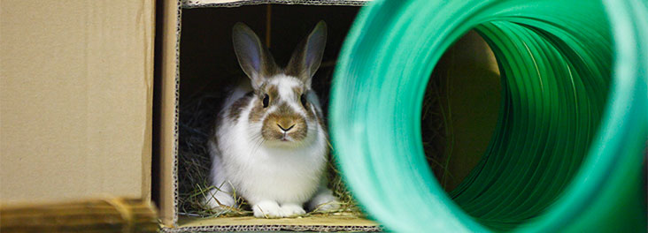 Single juvenile rabbit hiding in cardboard box © RSPCA Photolibrary