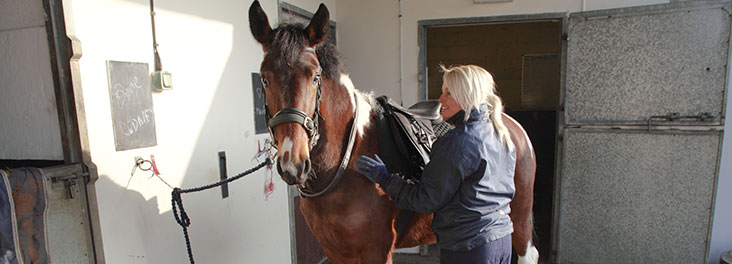 Horse rehabilitation at Felledge Equine Centre © RSPCA Photolibrary