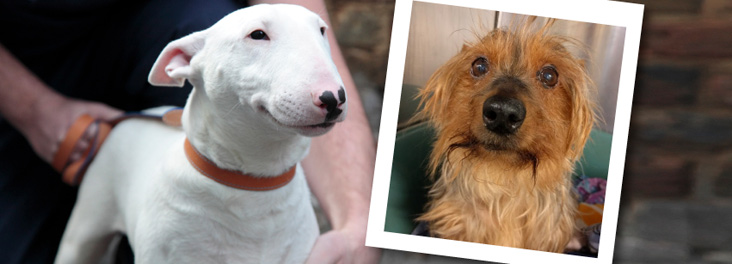 Abandoned dogs Rose and Bertie © RSPCA