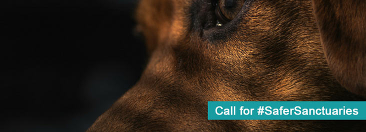 Call for #SaferSanctuaries with RSPCA © Canva