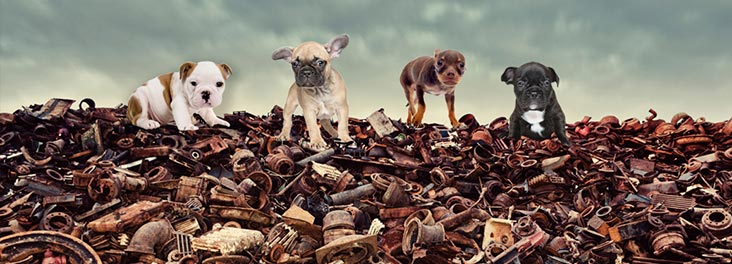Puppies standing on top of a rubbish pile © RSPCA