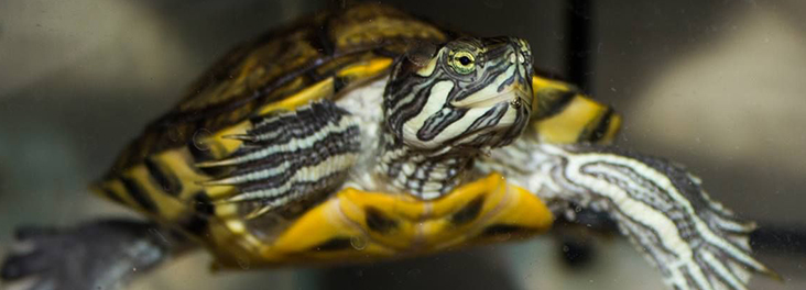 Feeding Terrapins : caring for a terrapin terrapins have complex welfare needs here you ll ...