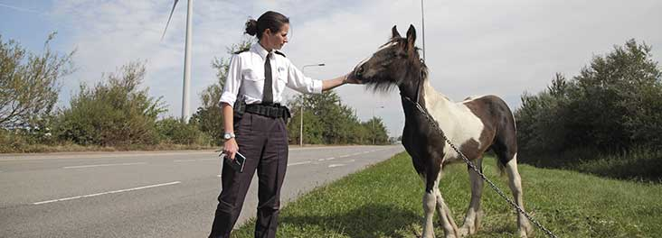 RSPCA inspector with a tethered horse © RSPCA