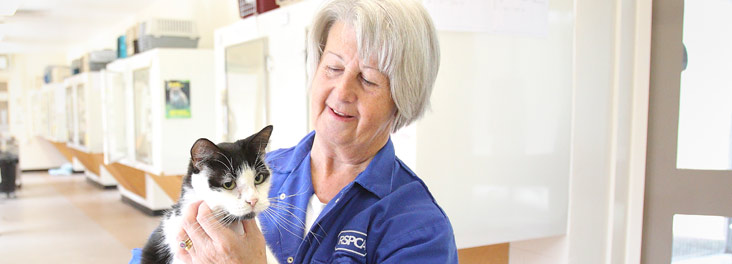 RSPCA volunteer holding a cat © RSPCA photolibrary