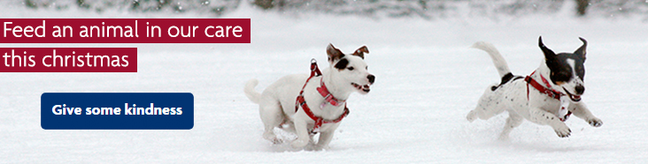 Two dogs running in the snow at Christmas © RSPCA photolibrary