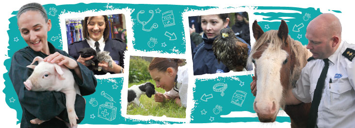 What we do © RSPCA