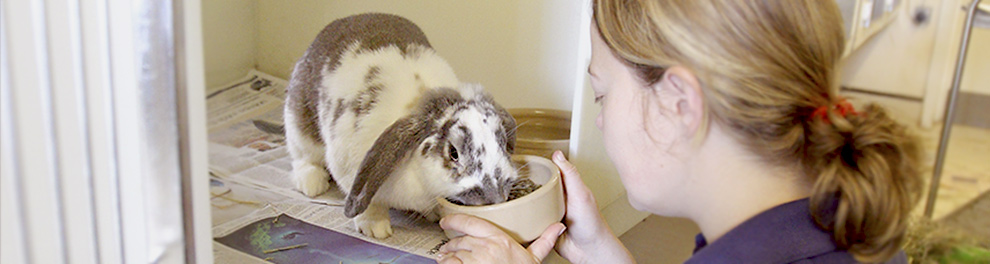 Volunteer feeding a rabbit © RSPCA Photolibrary