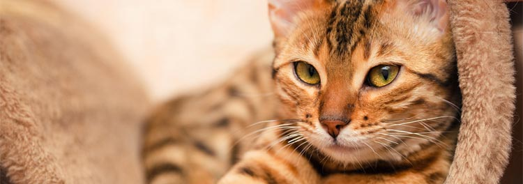 Cat portrait © RSPCA Photolibrary