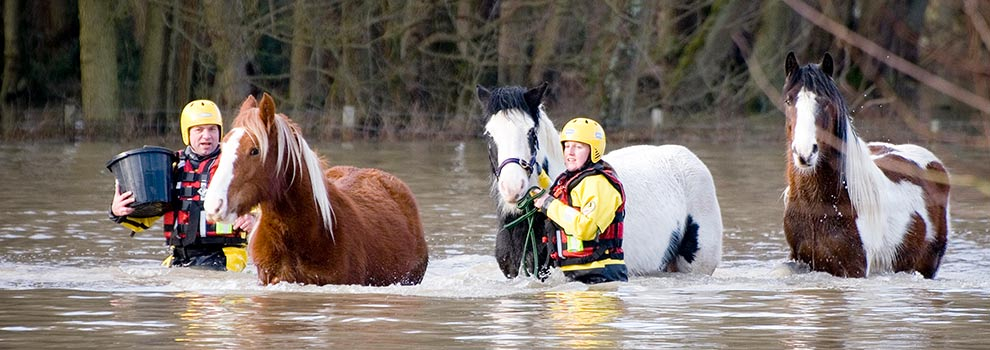 RSPCA Inspectors rescuing stranded horses in flood water © RSPCA photolibrary