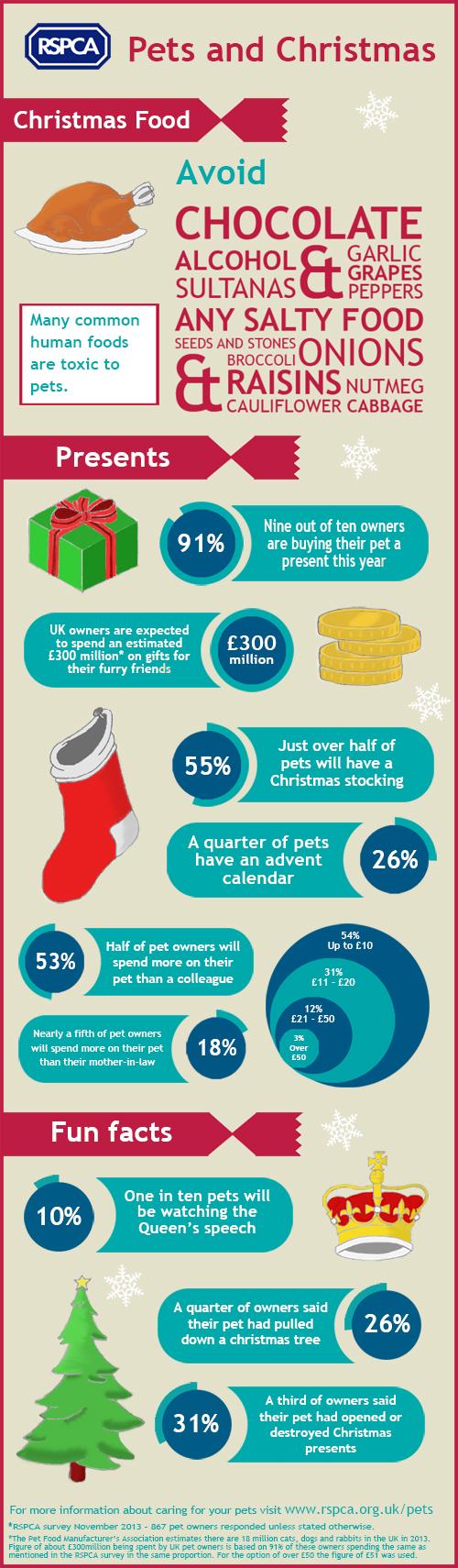 Christmas pets infographic