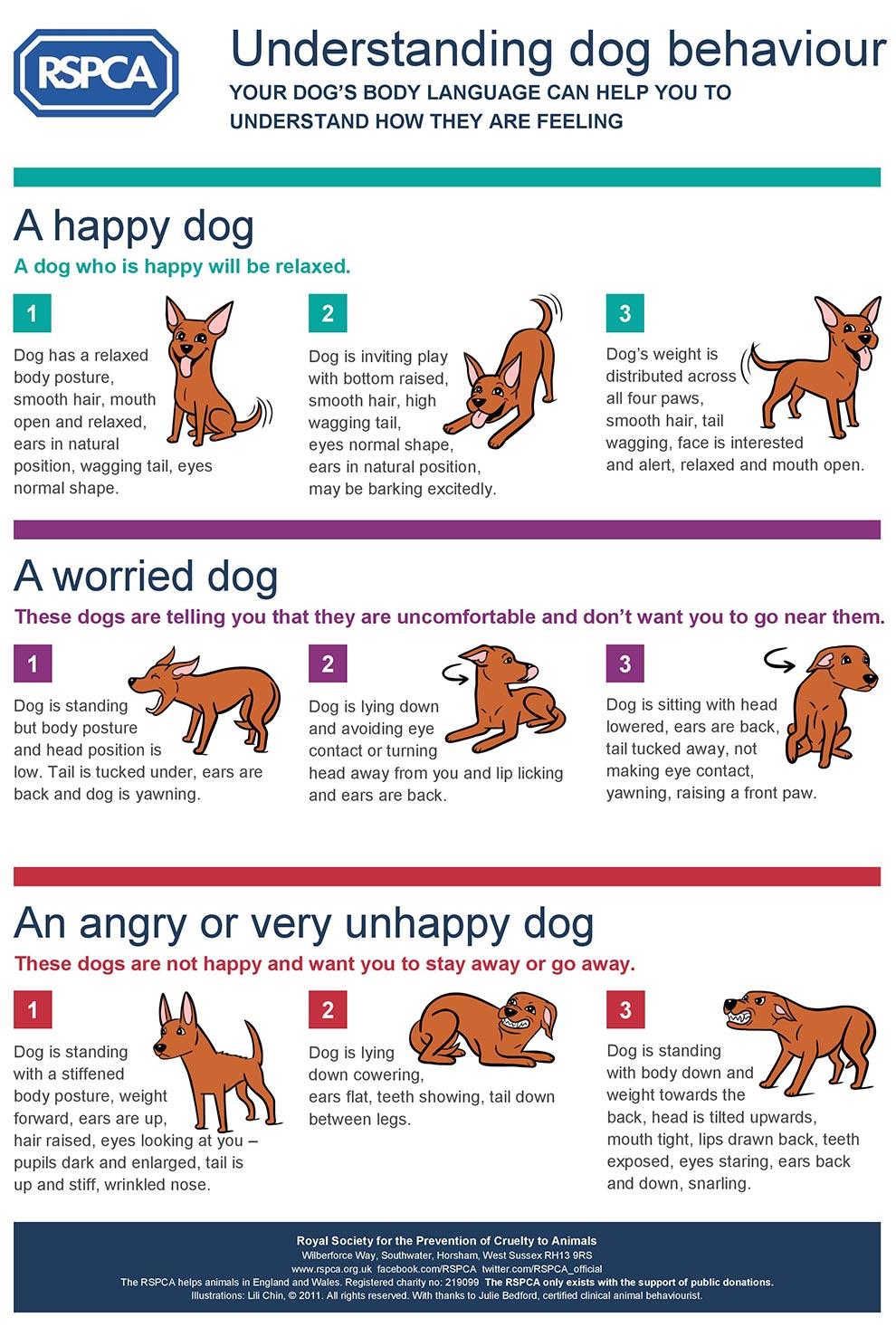 RSPCA Understanding Dog Behaviour