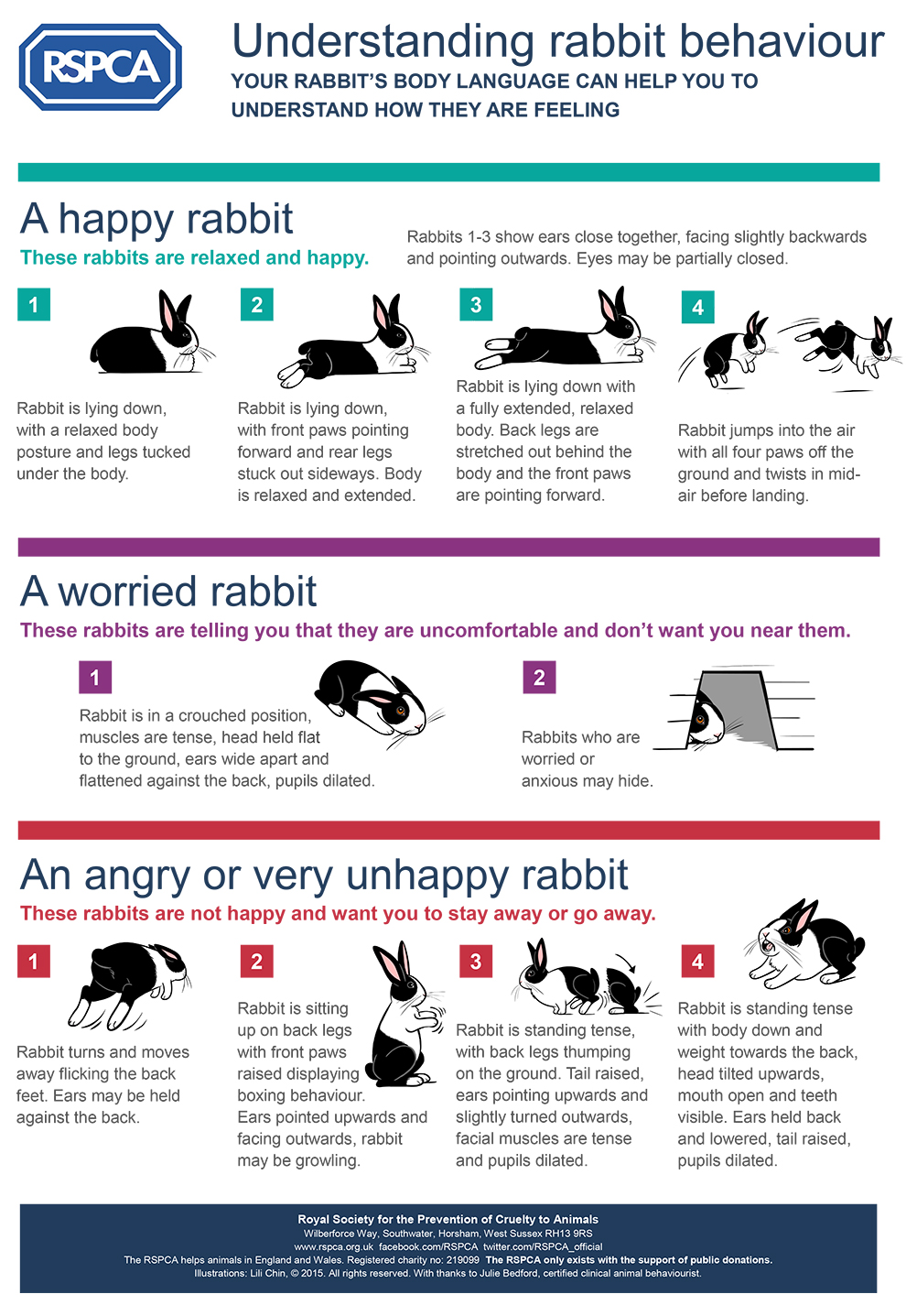 RSPCA Understanding Rabbit Behaviour