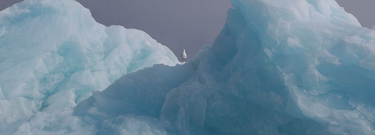 Bird perched on iceberg