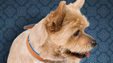 Whiskers the terrier © RSPCA