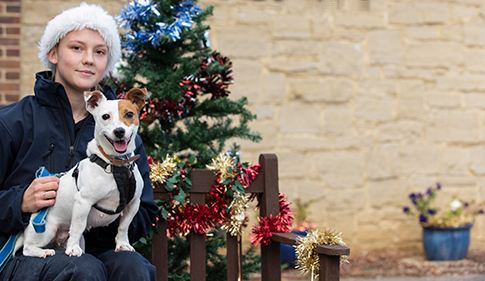 Dog in RSPCA care at Christmas © RSPCA Photolibrary