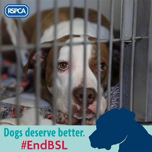 Bailey the dog with our 'Dogs deserve better' Twibbon © RSPCA