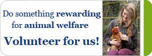 Do something rewarding for animal welfare. Volunteer for us! © RSPCA